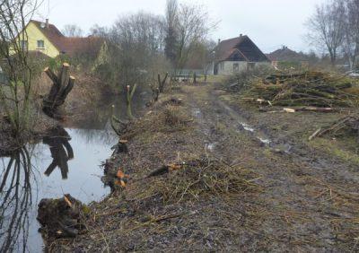 Bois biomasse ripisylve ruisseau
